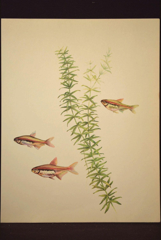 Tropical Fish Wall Decor Wall Art Aquarium Fish Decor Aquatic Plant ...