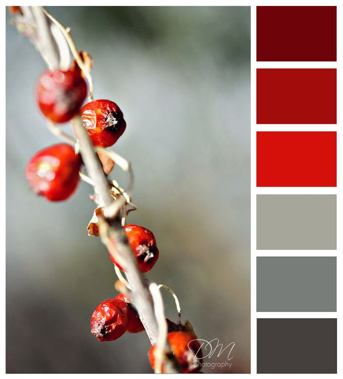 Winter Berries Red Grey Color Palette