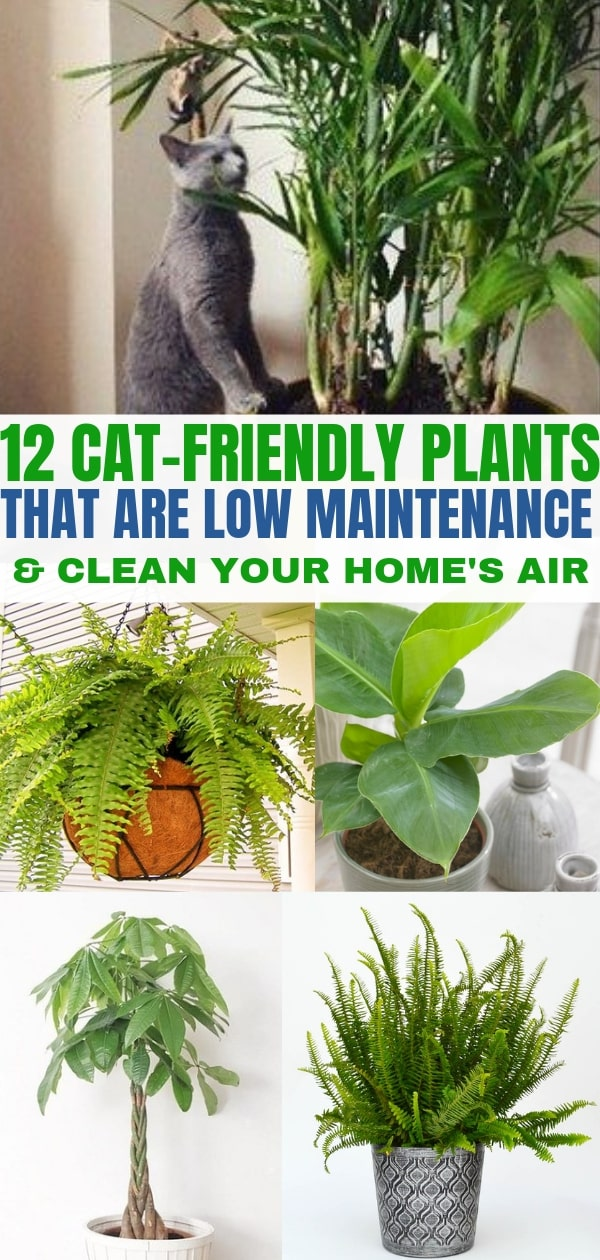 12 Indoor Plants That Clean The Air And Are Safe For Cats Air Cleaning Plants Cat Friendly Plants Plants