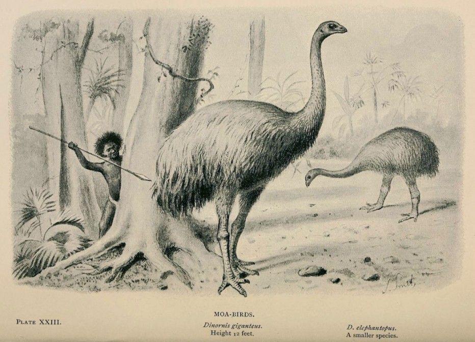 Rare & Extinct Creatures - Moa & Elephant Bird