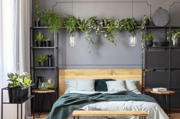 Pflanzen im Schlafzimmer - 13 gute Gründe - [SCHÖNER WOHNEN] #Wohnideen #sch ...   - Schlafzimmer - #Gründe #gute #Pflanzen #Sch #Schlafzimmer #Schöner #Wohnen #Wohnideen #pflanzenimschlafzimmer Pflanzen im Schlafzimmer - 13 gute Gründe - [SCHÖNER WOHNEN] #Wohnideen #sch ...   - Schlafzimmer - #Gründe #gute #Pflanzen #Sch #Schlafzimmer #Schöner #Wohnen #Wohnideen #pflanzenimschlafzimmer Pflanzen im Schlafzimmer - 13 gute Gründe - [SCHÖNER WOHNEN] #Wohnideen #sch ...   - Schlafzimmer - #pflanzenimschlafzimmer