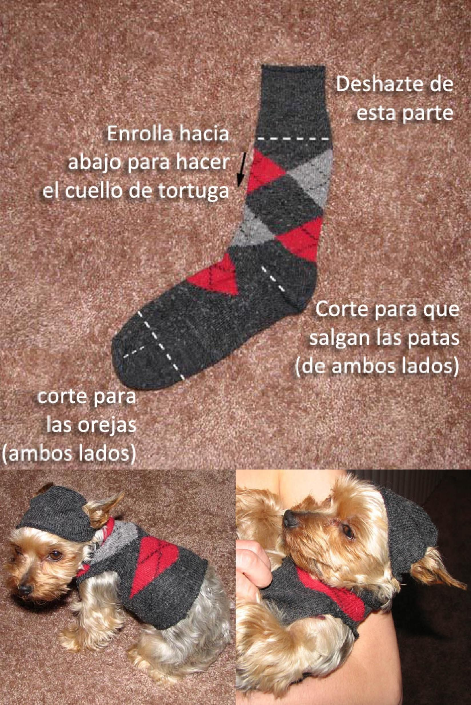 Suéter para tu perro con un calcetín | Mascotas | Pinterest ...