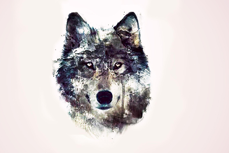 Pin van Henk Sparreboom sparreboom op wolves art Wolven