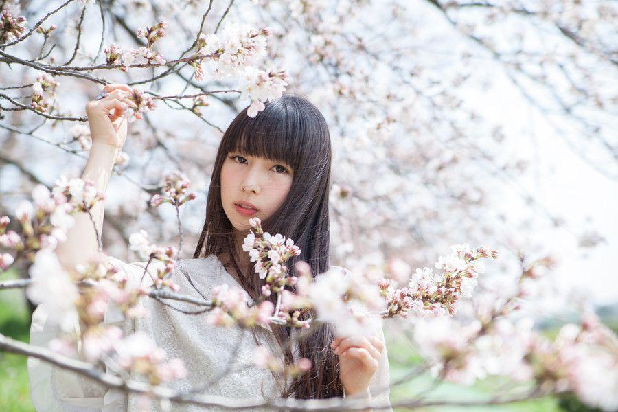 sakura by yu n on 500px