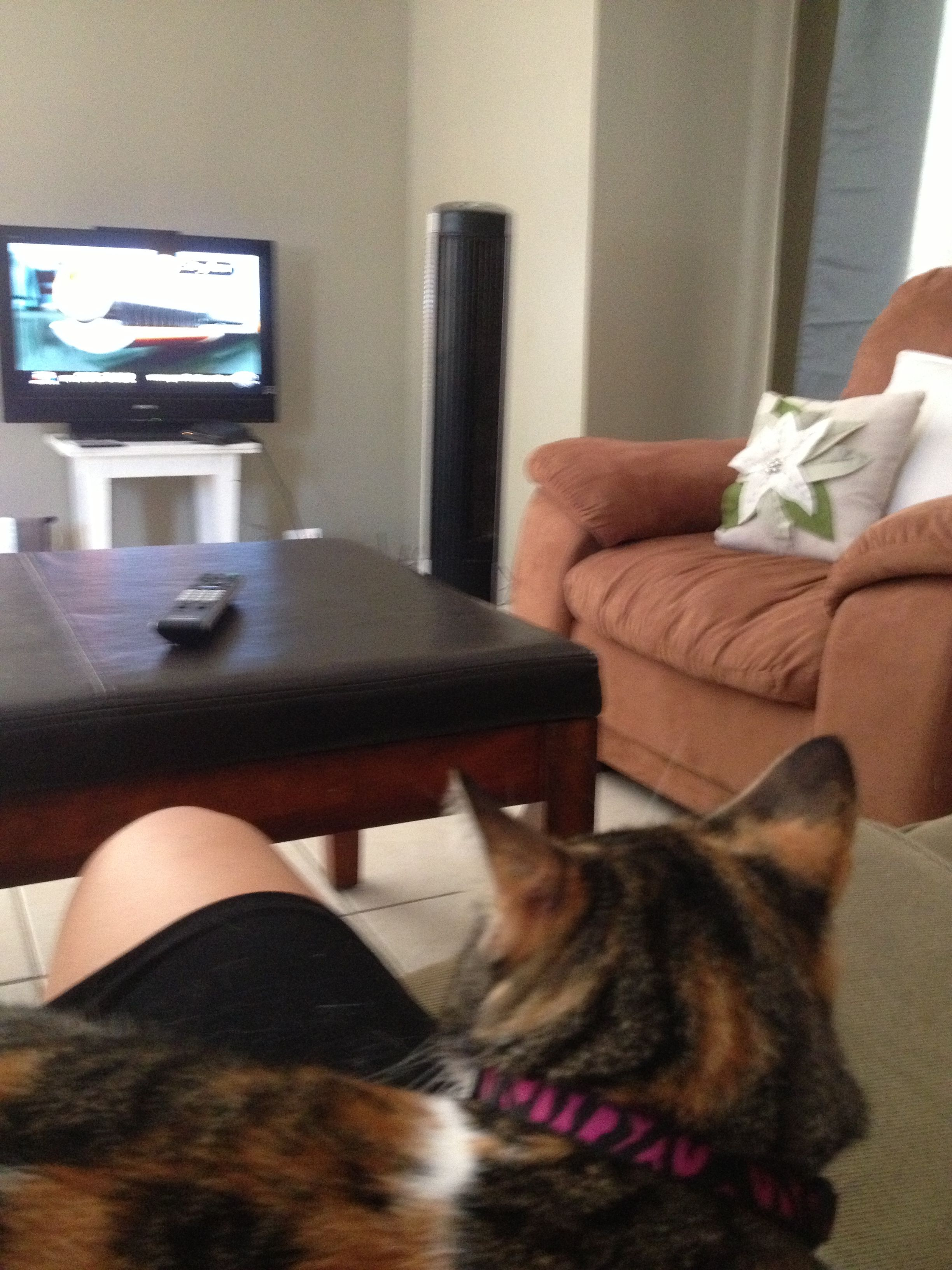 Just Watching Tv Relaxing My Best Friend Relax Pets