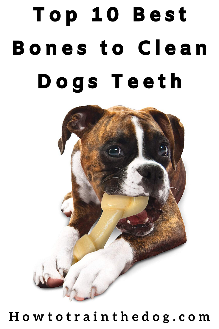 Top 10 Best Bones to Clean Dogs Teeth Dog teeth, Good