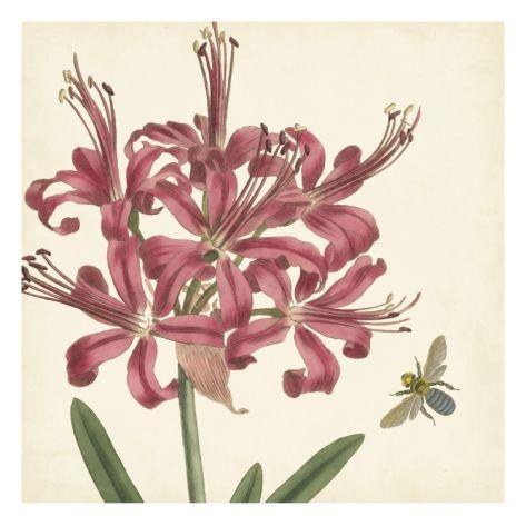 Garden Delight II Giclee Print