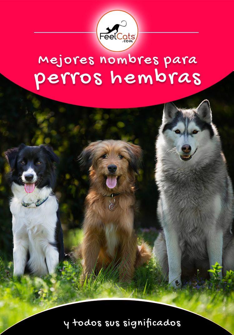 Pin En Nombres Para Perros Hembras