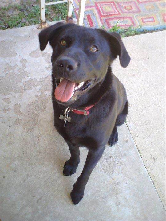 DOG MISSING JEMISON/THORSBY, AL area (just South of