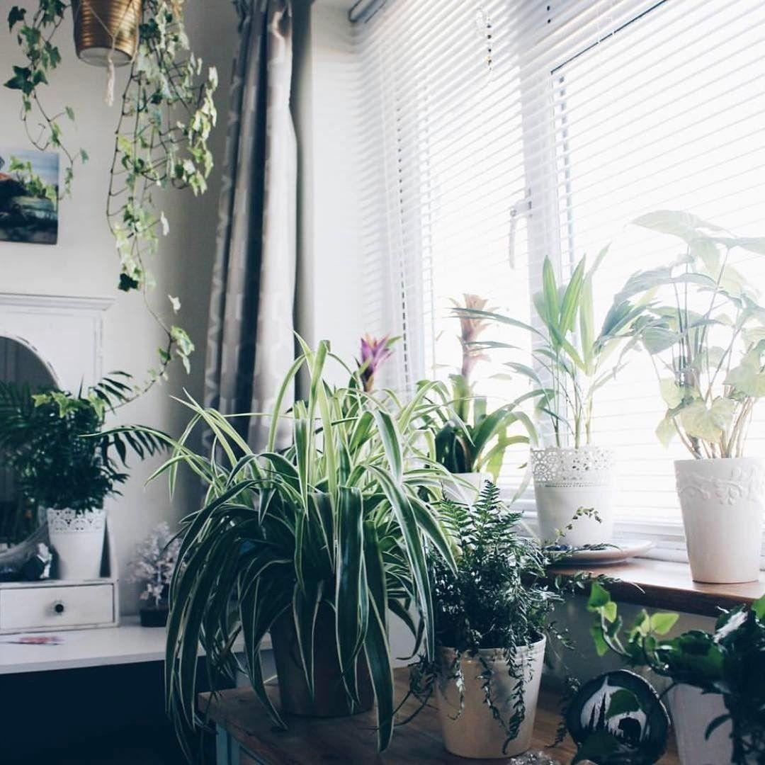Indoor Greenhouse Window