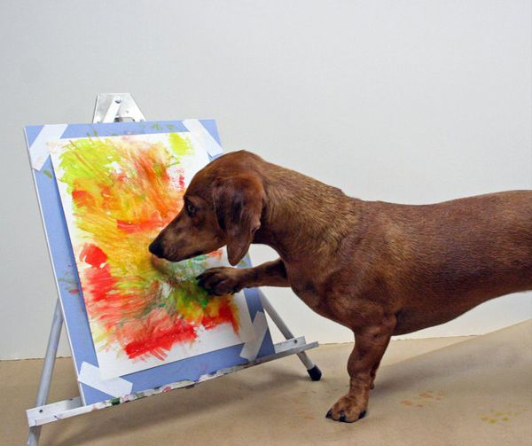 Watch Ammo the Dachshund Paint with His Paws   Dogster