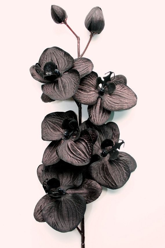 One Black Orchid 3 5 Inch Size Artificial Flowers Etsy In 2020 Black Orchid Black Flowers Orchids