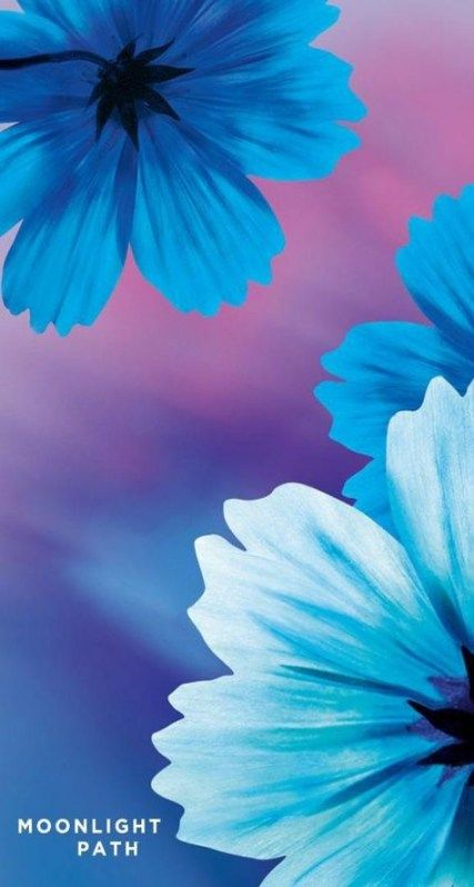Flowers Wallpaper Iphone Quotes 69 Trendy Ideas