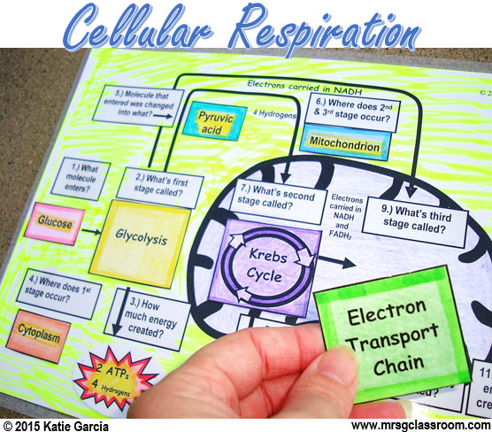 Cellular Respiration Cutout Activity Science resources