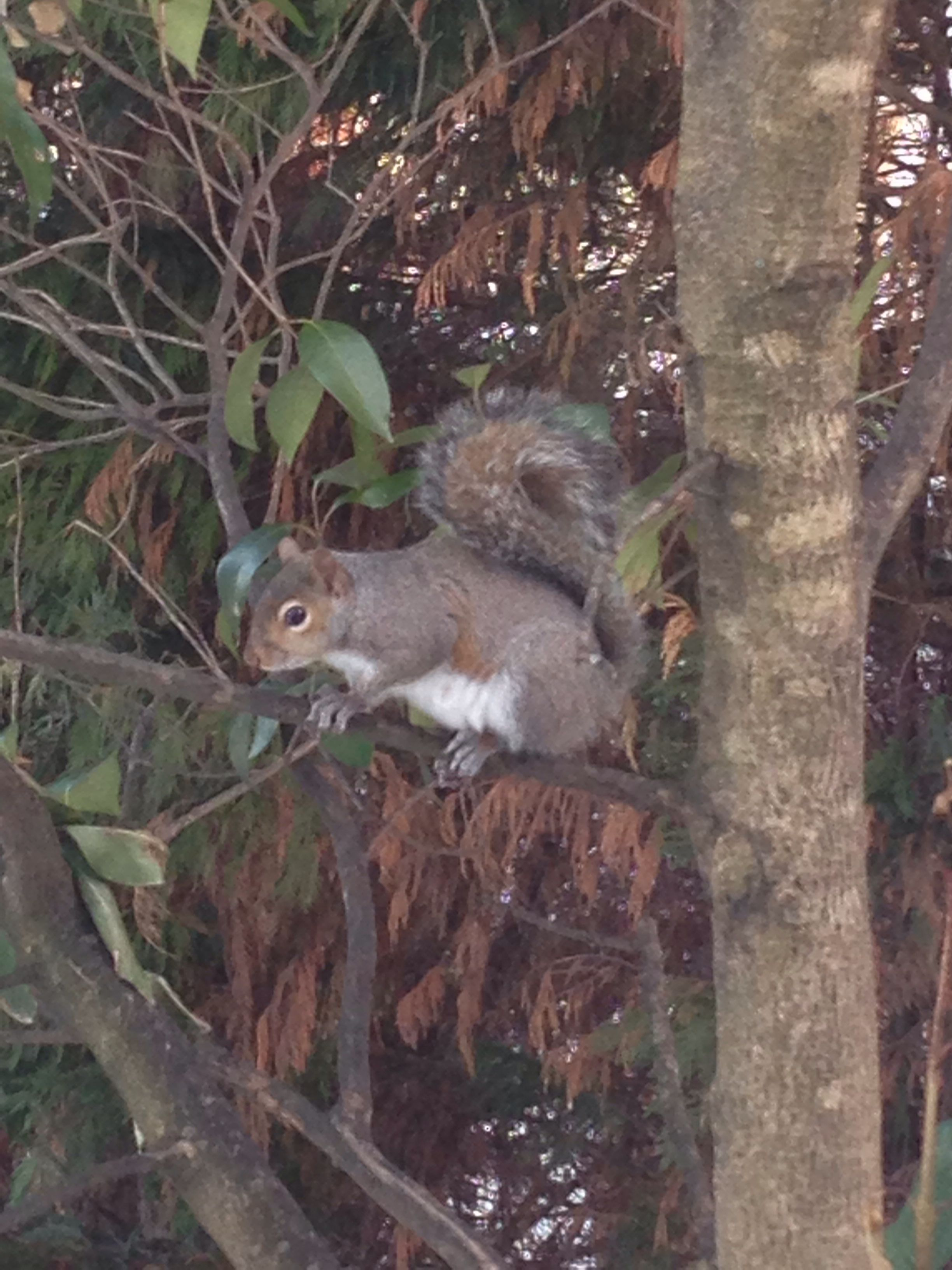 Our backyard squirrel after winter storm PAX- happy the now has melted! No more freezing paws!