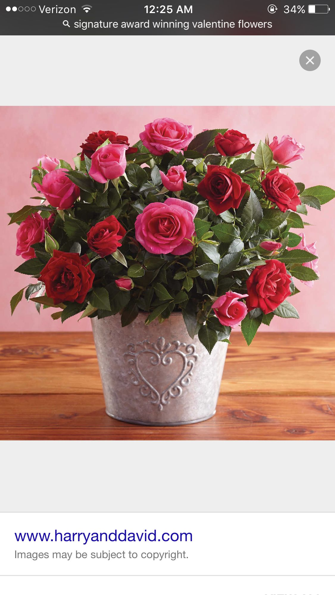 Floral ideas plant centerpieces plant gifts mini roses