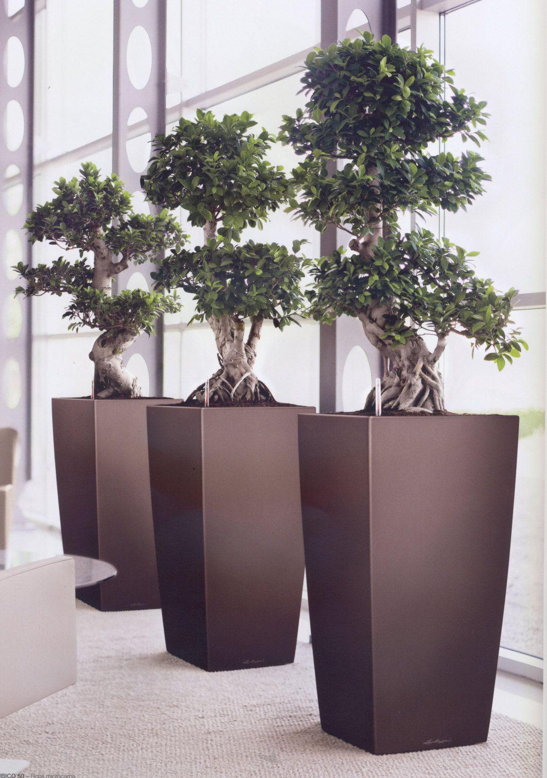 office bonsai. This Office Atrium Has A Striking \ Bonsai