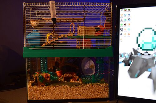 My Syrian Hamsters Cage He Loves Climbing And Digging It S A 20 Gallon Aquarium With A Small Animal High Rise Cage Syrian Hamster Small Pets Hamster Cages
