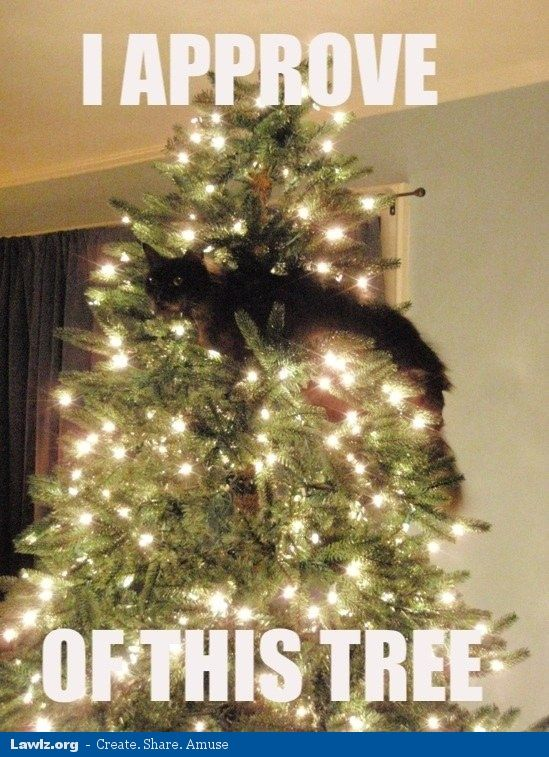 cat christmas memes - Google Search   Cats   Pinterest   Funny sites