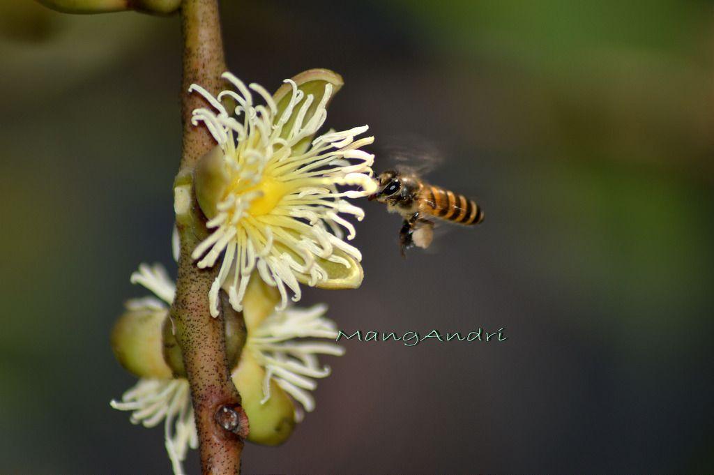 Bunga Palem