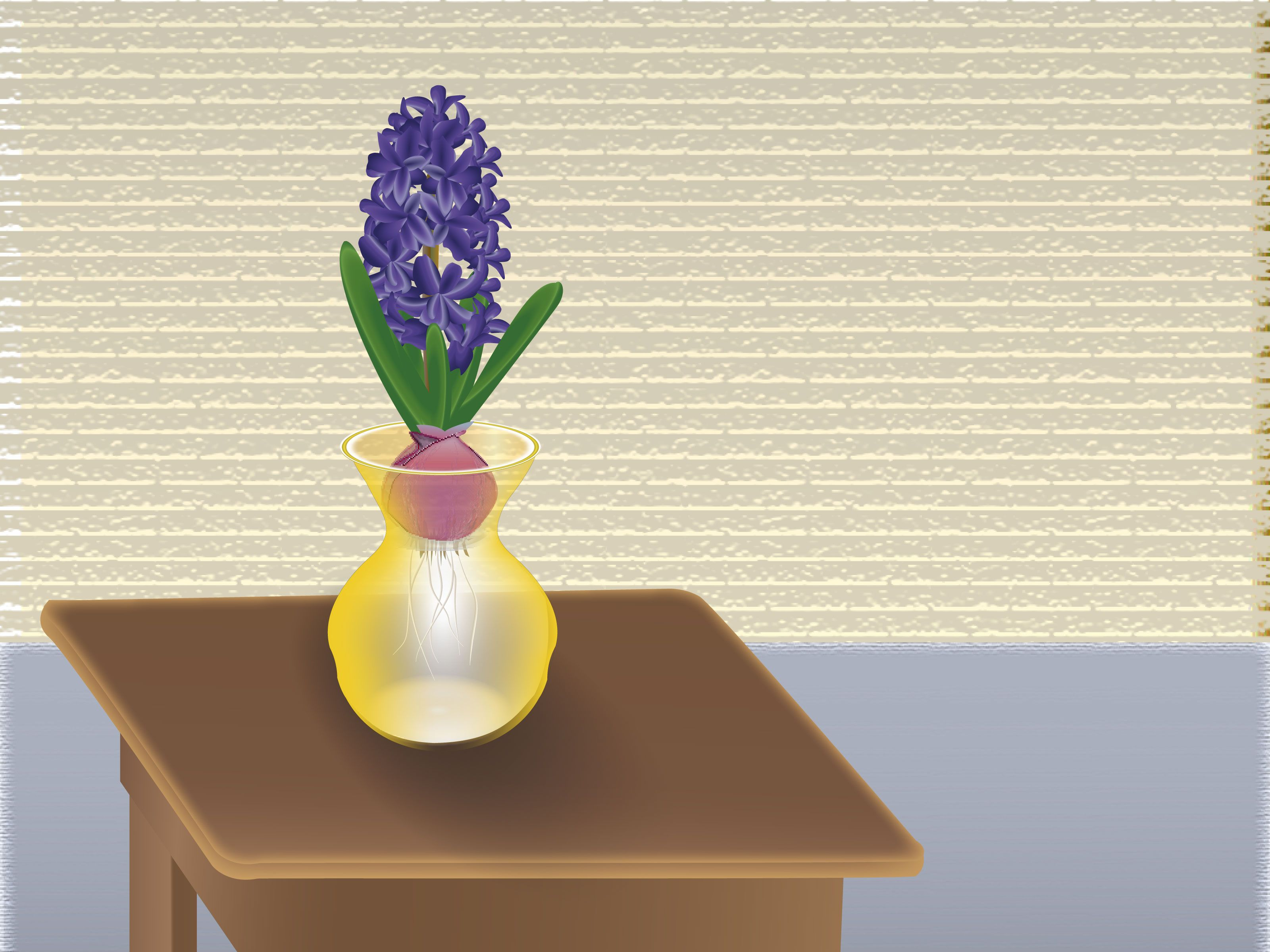 Grow a hyacinth bulb in water bulbs plants and gardens grow a hyacinth bulb in water reviewsmspy