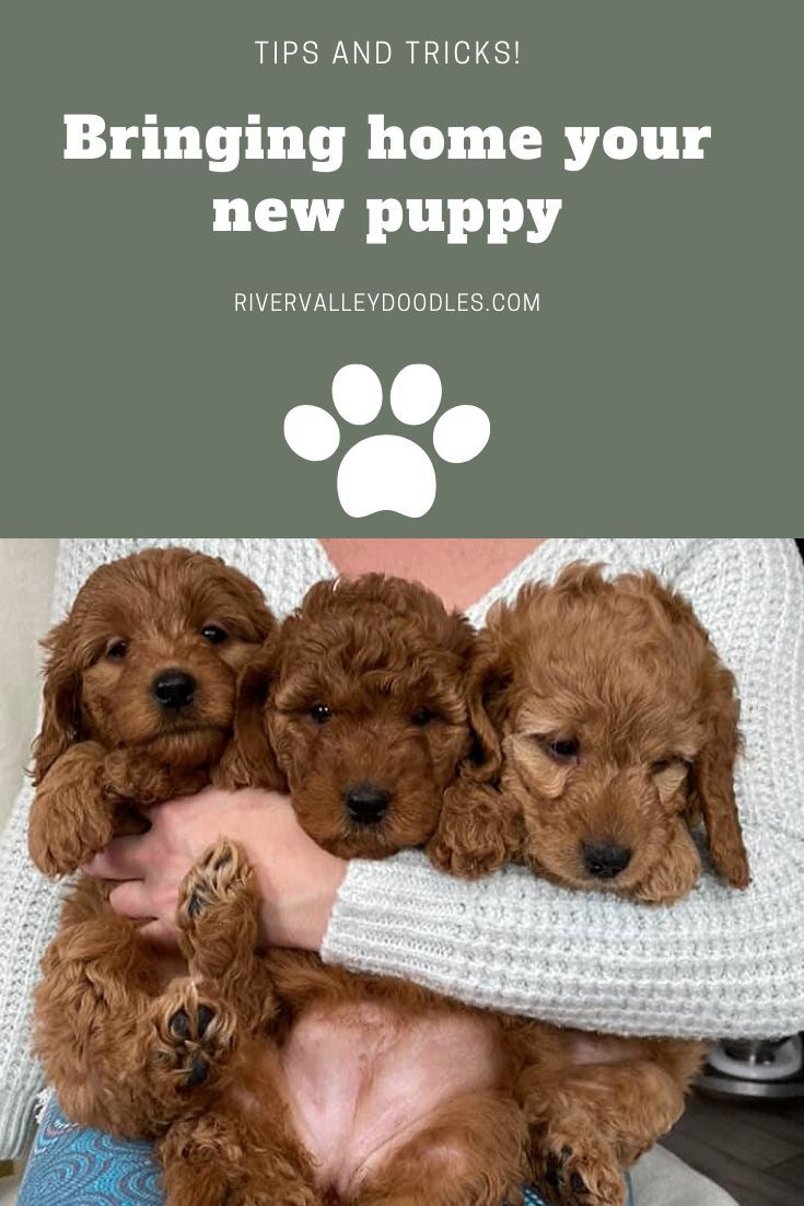 Bringing home your new puppy tips and tricks weve got
