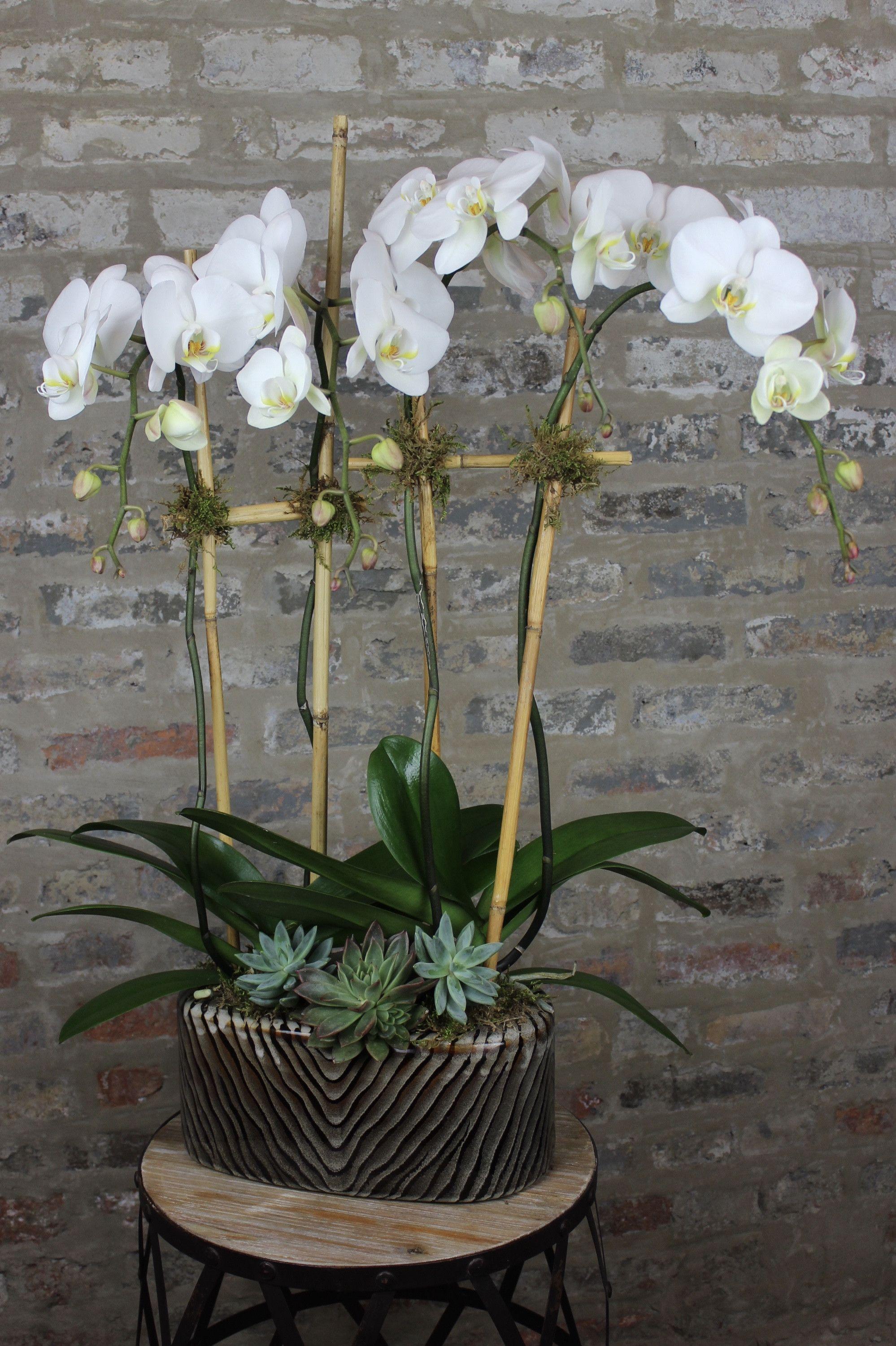 Oak Street Orchids Flower Delivery Orchid Plants Orchids