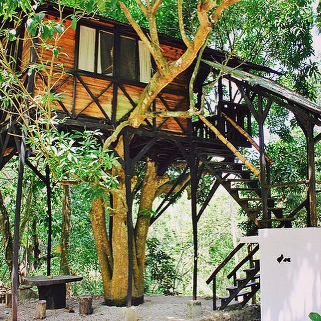 The Academy Of Tantric Science On Instagram When S The Last Time You Slept In A Treehouse In The Jungle This Dreamy Crash Pad Tree House Tantric Instagram