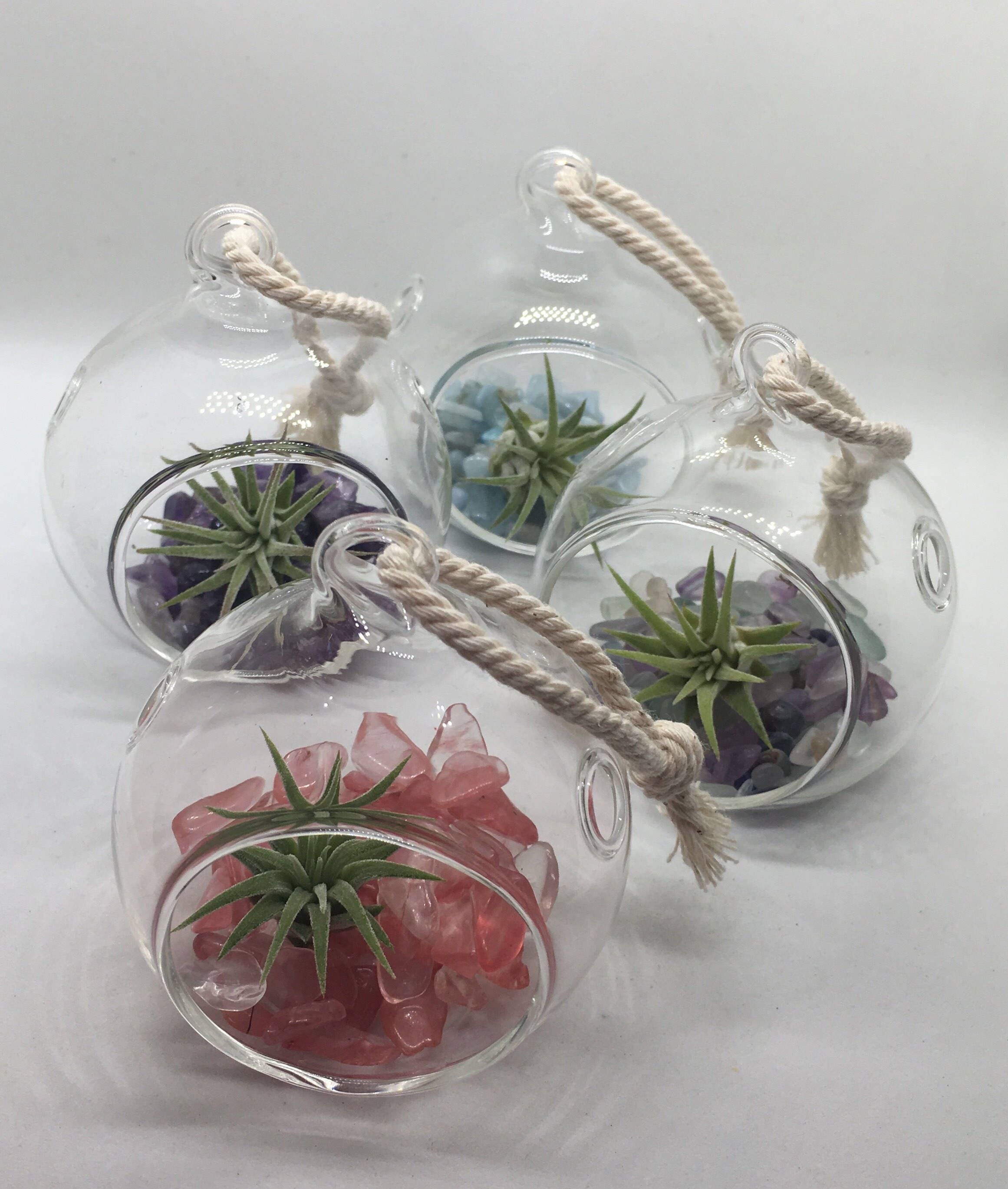 "Mini Terrarium Orb / 2.35"" Orb / Air Plant Terrarium / Air"