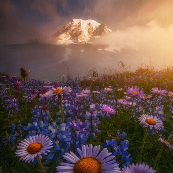 Path to Mount Rainier, Washington