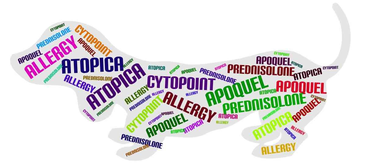 Cytopoint Apoquel Atopica Great Products For Pet Owners Best