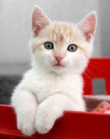#KittyLove