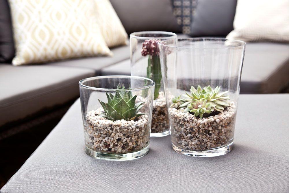 Tischdeko wohnzimmer  Pflanzentrend des Jahres: Sukkulenten | Westwing, Kaktus und Magazin