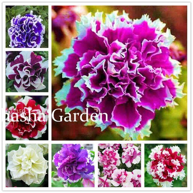 100 pcs//bag petunia seeds double petals petunia flower seeds perennial bonsai