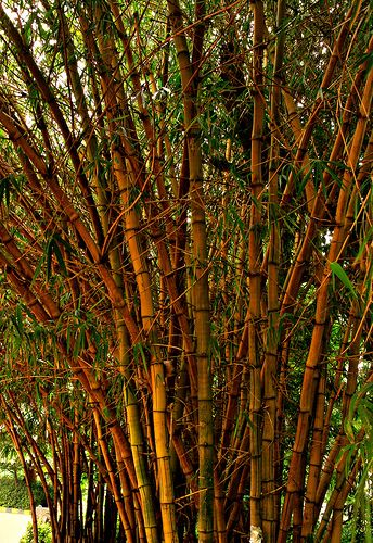 (Posted from rapidprototypechina.com) A few nice china tooling make images I found: Oh,Inspiring Wind, Make Thy Sweet Music Out of my Hollowness by your Soft Caressing strokes…..  Image by -Reji Shot  at Lal Bagh Gardens, Bangalore, India Bamboo plants are one of the world's most versatile resources. Bamboo, because of... Read more on http://www.rapidprototypechina.com/ohinspiring-wind-make-thy-sweet-music-out-of-my-hollowness-by-your-soft-caressing-strokes/