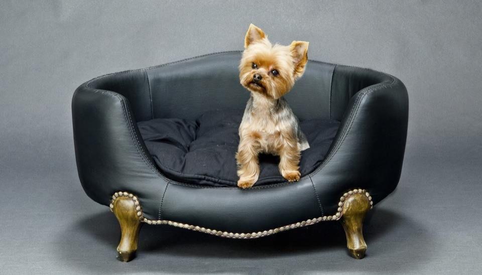 comment nettoyer l 39 urine de votre chien sur votre canap comment nettoyer nettoyant et canap s. Black Bedroom Furniture Sets. Home Design Ideas