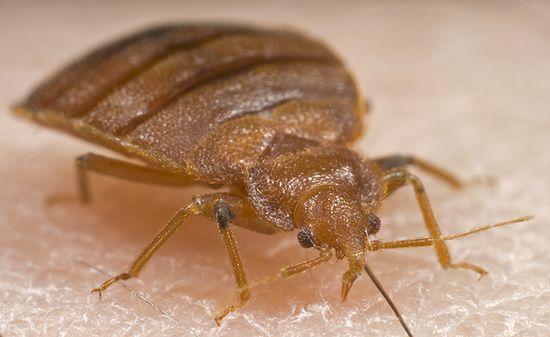 Pest Defense Solutions El Paso Premier Bed Bug Pest Control