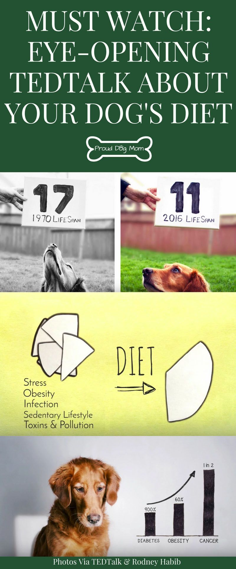 Why Your Dog S Diet Is Life Changing Proud Dog Mom Dog Diet Diabetic Dog Dog Nutrition