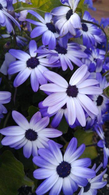 Idea for Nature, Flowers, Petals