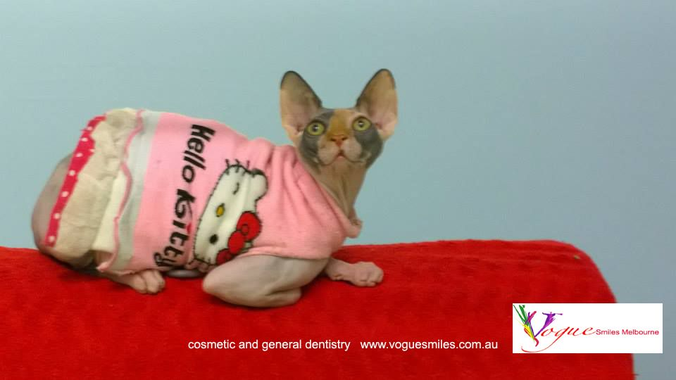 Zooky In Her Cute Hello Kitty Pink Dress Kittens In Costumes Cat Costumes Sphynx Cat