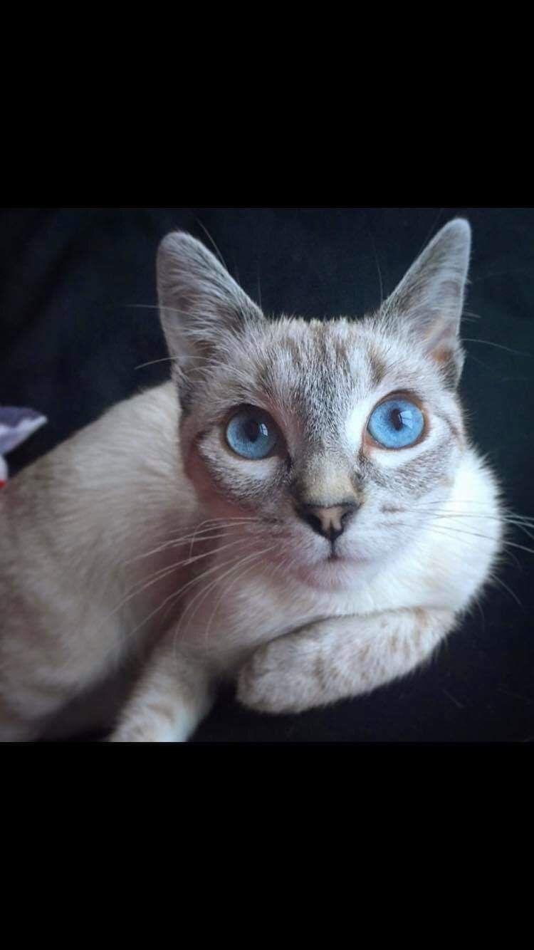 Allerpet Cat Dander Remover 12 Oz Bottle Chewy Com Cat Dander Cat Sleeping Sleeping Kitten