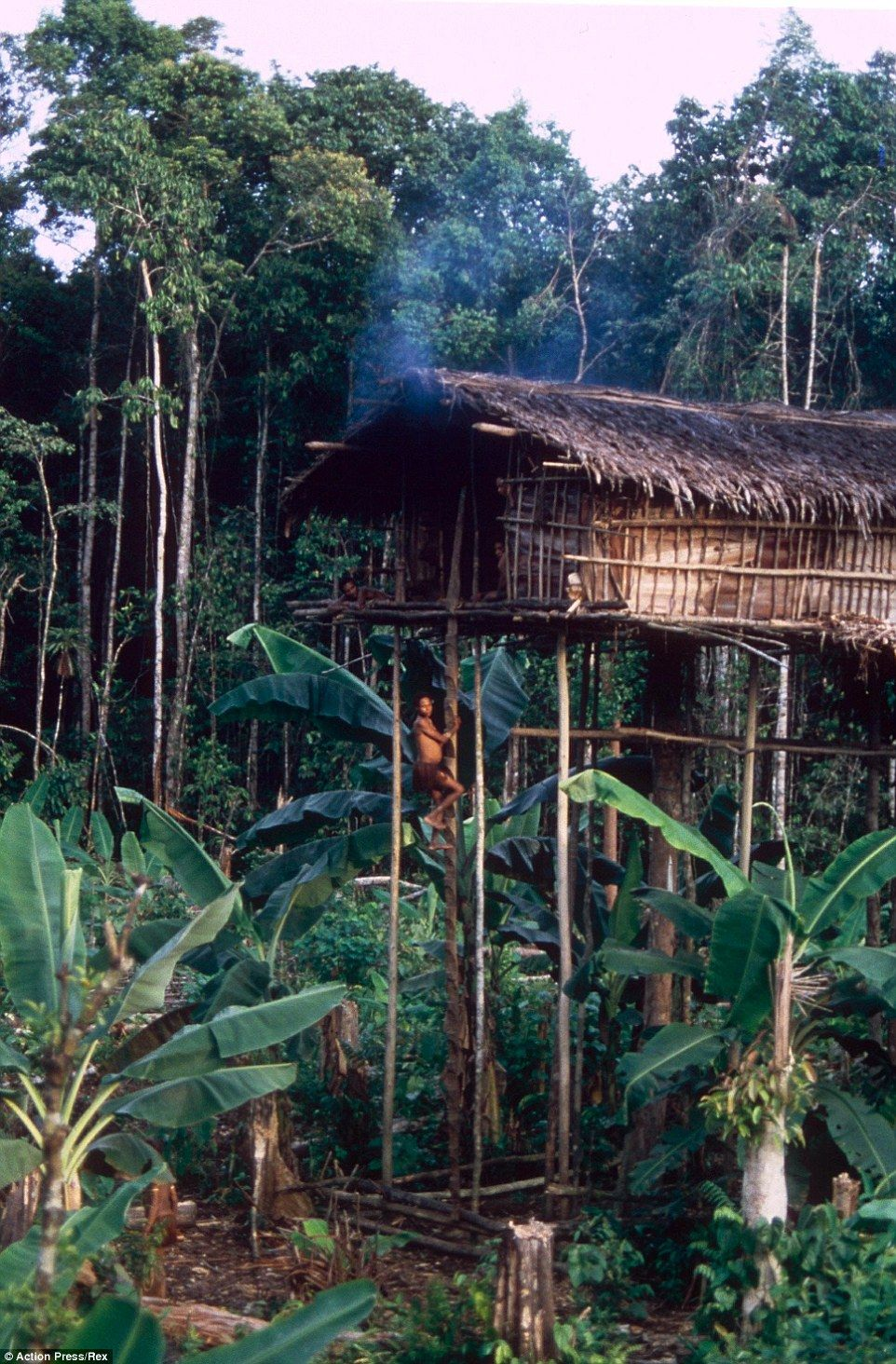 meet the lost treehouse tribe of new guinea treehouses remote