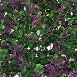 Busca imágenes de Paisajismo de interiores de estilo translation missing: mx.style.paisajismo-de-interiores.moderno en translation missing: mx.color.paisajismo-de-interiores.verde: Arrayan Purple. Encuentra las mejores fotos para inspirarte y crea tu hogar perfecto.
