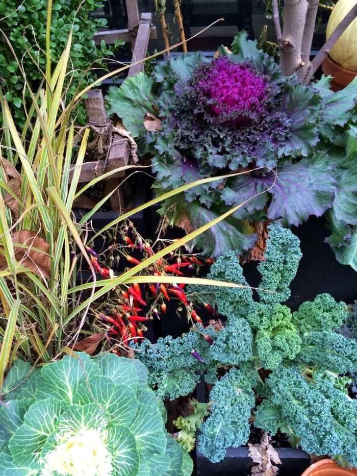 Im Garten können Sie verschiedene Arten von Kohl als Dekoration ...