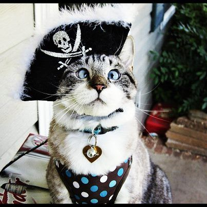 60f91c1653b Check Out These Hilarious Halloween Costumes For Your Cat
