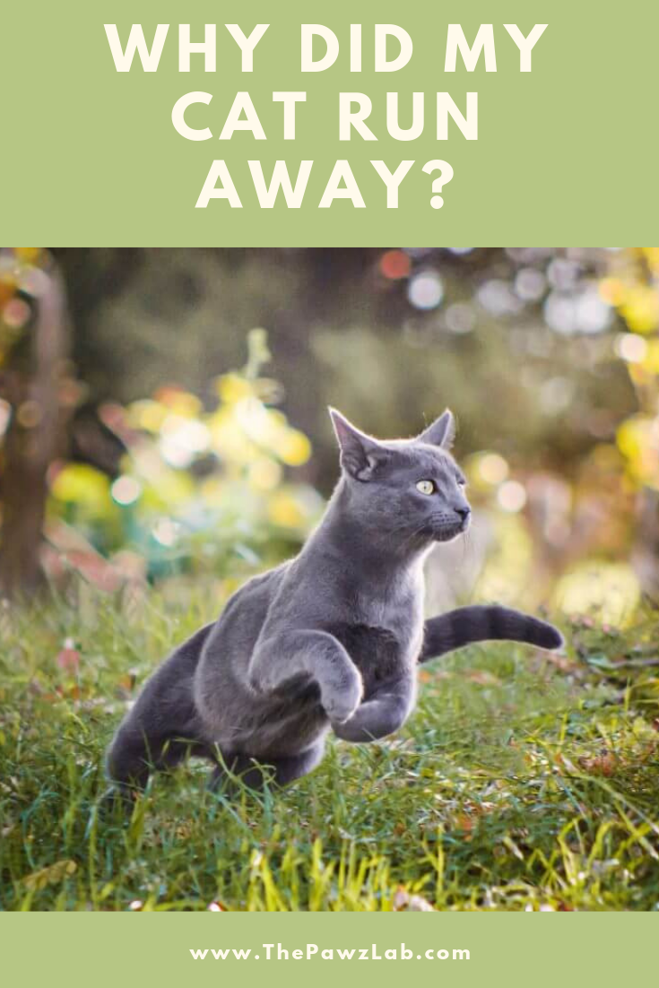 Find Out Why Cats Go Away To Die? Cat run, Cats, Cats