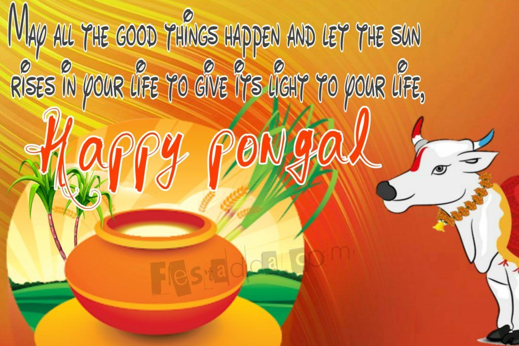 Pin on Happy pongal wishes