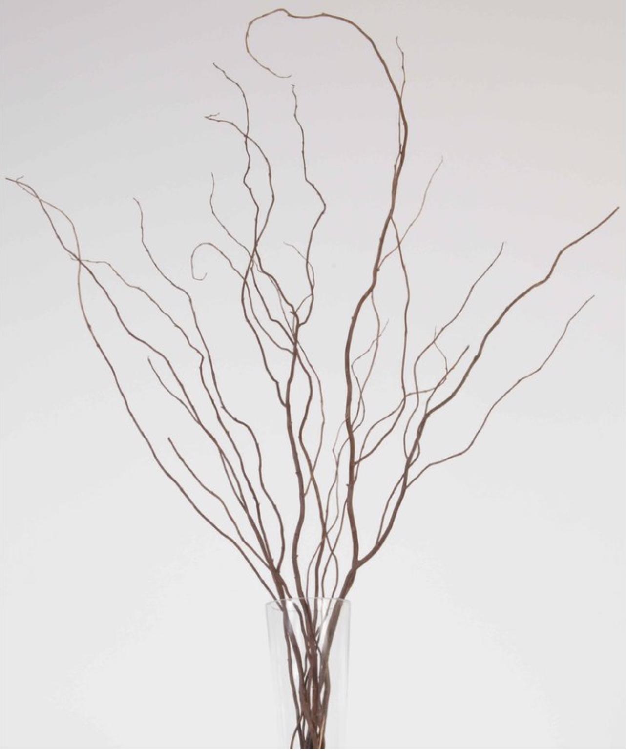 Curly Willow Branch Willow Branches Curly Willow Dry Branch