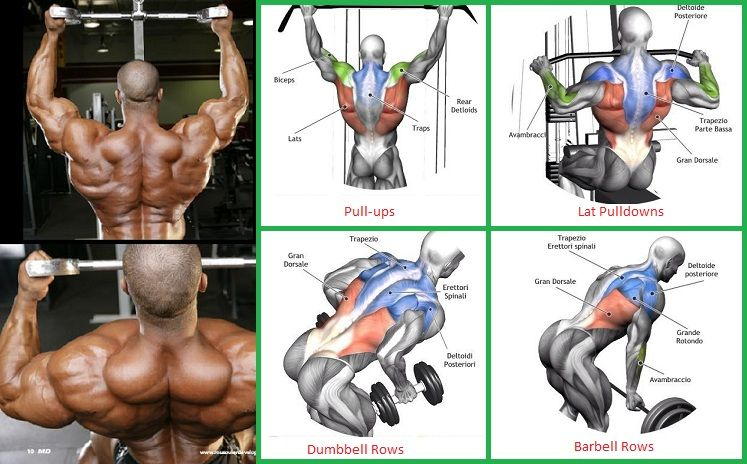 Back Exercises Chart