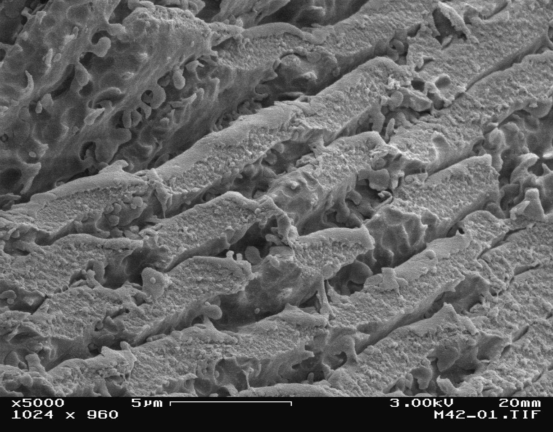 фотографии сделанные цифровым микроскопом сезон, когда